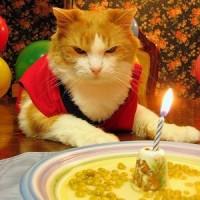 Evil Cats And Birthdays
